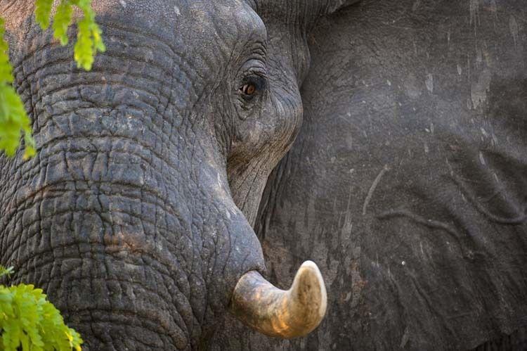 1BR_AfricaOctober058_j.jpg