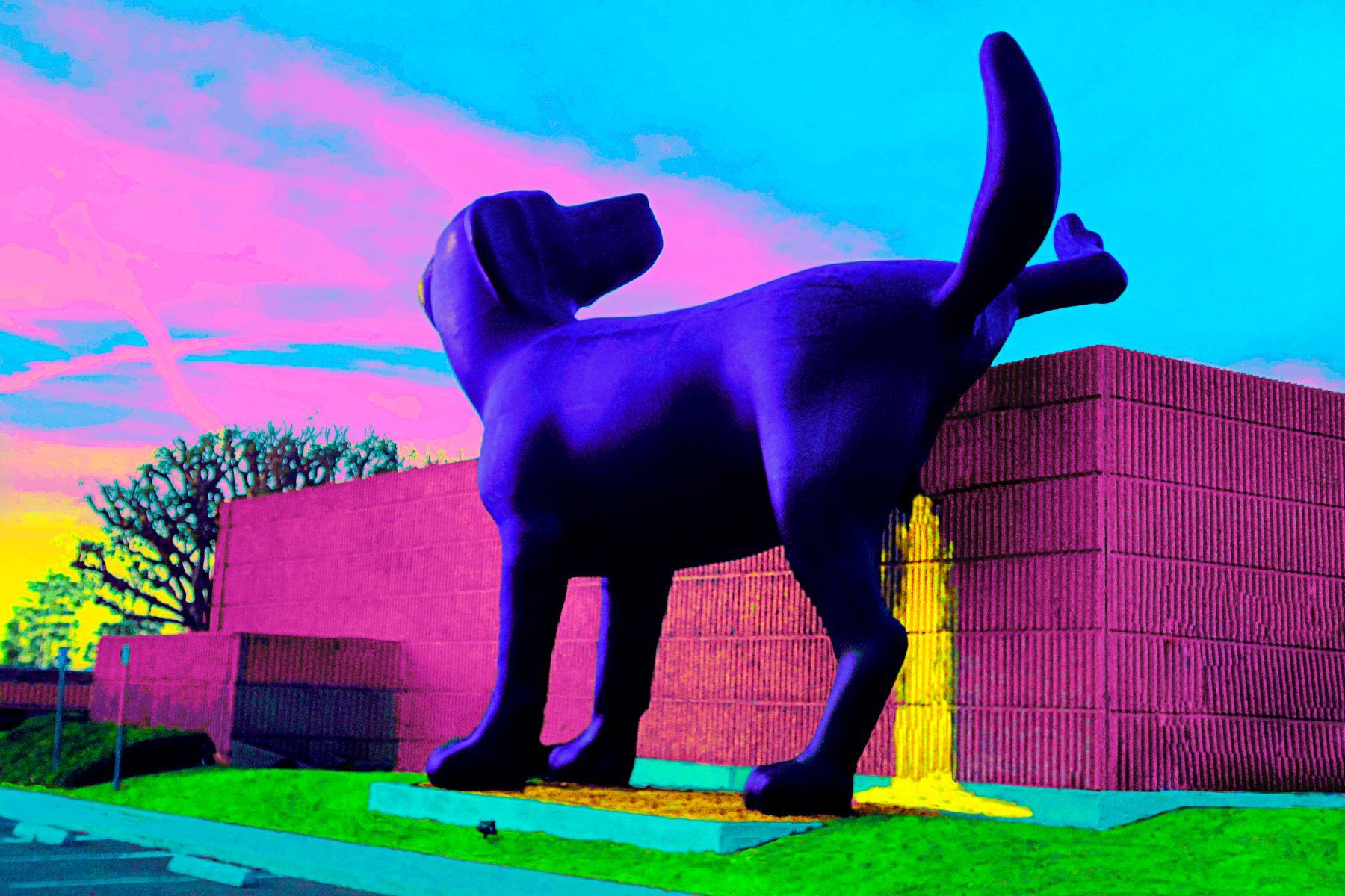 23_0_228_1janegottlieb_purpledogpees_ws.jpg