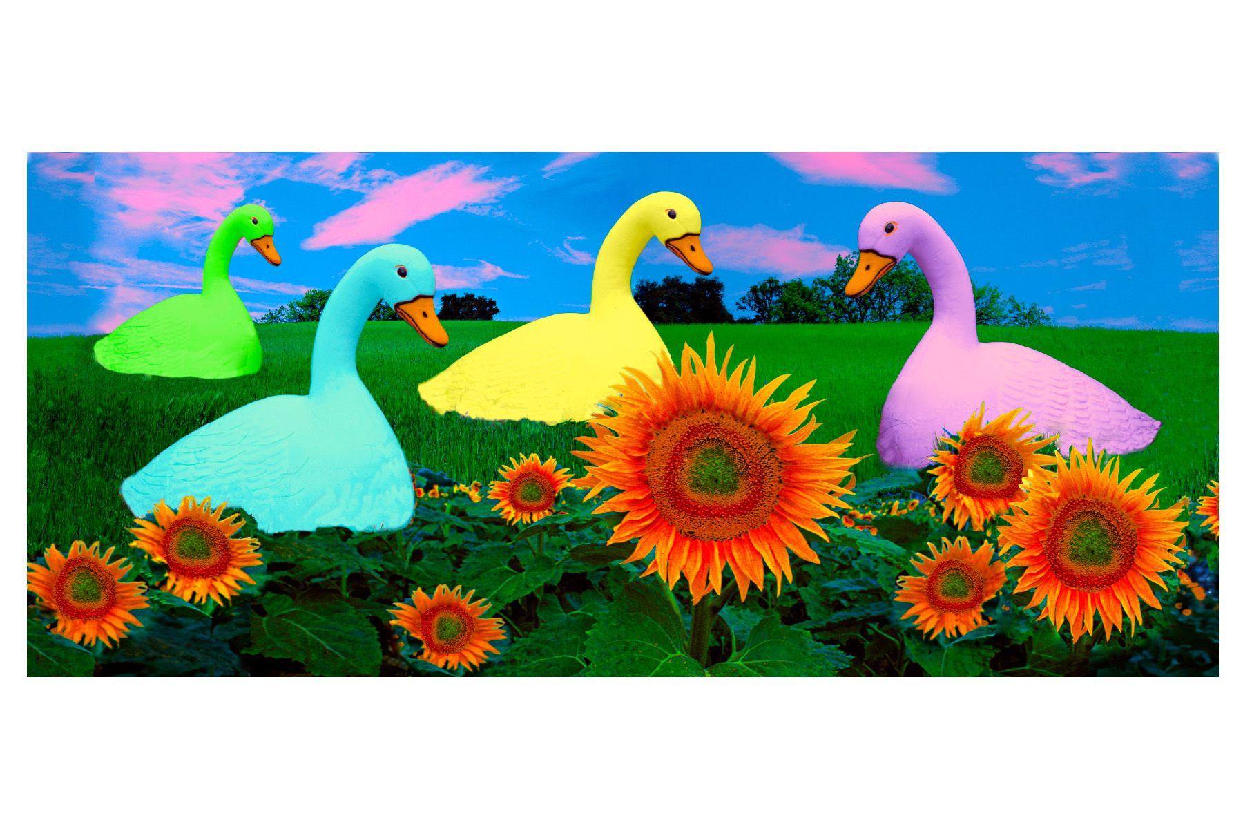 8_0_42_1d_gottlieb_geese_sunflowers.jpg