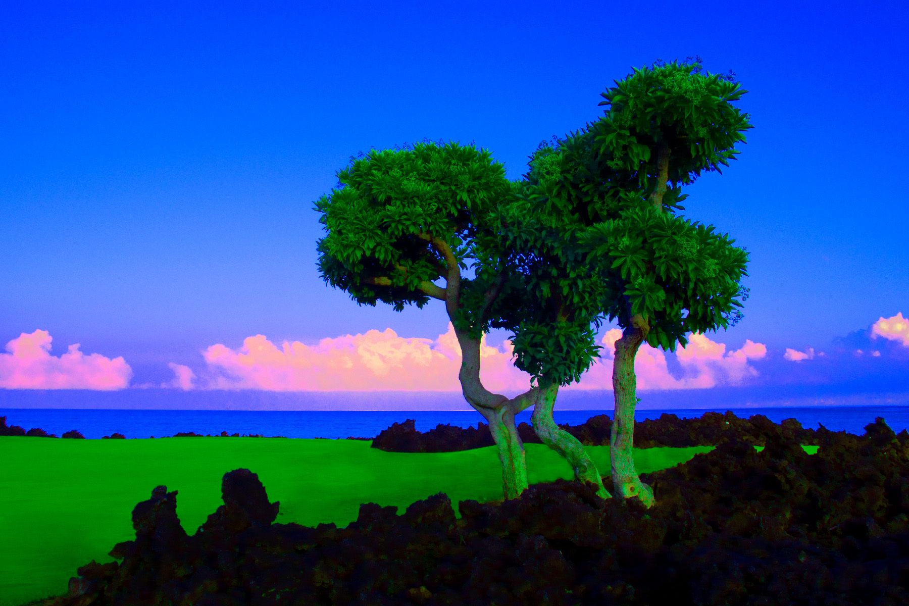 4_0_161_1l_gottlieb_hawaii_tree_1.jpg