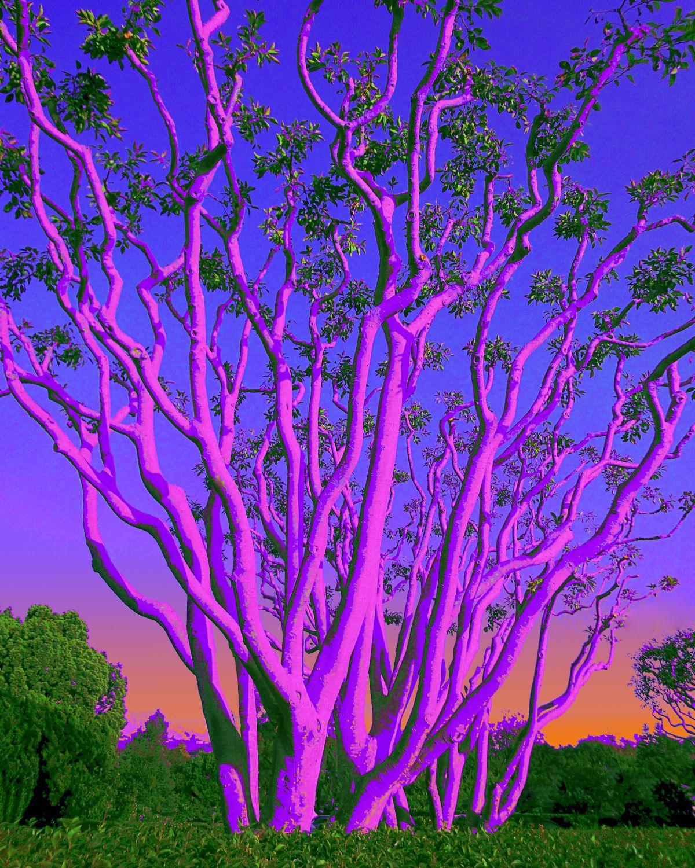 Gottlieb-Spooky Pink Trees