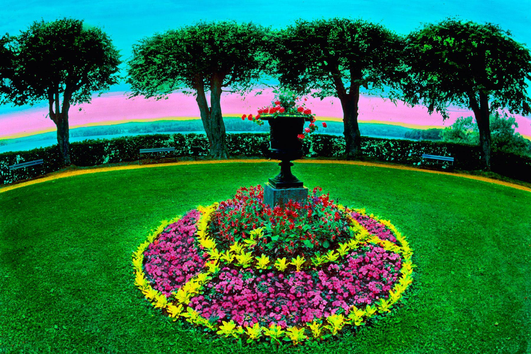 6_0_170_1landscapes_jane_gottlieb_circle_tree.jpg