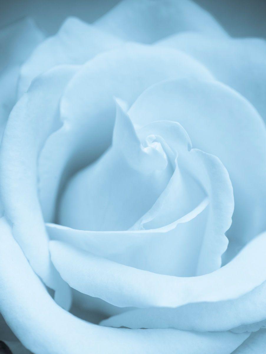 1macro_image_flower.jpg