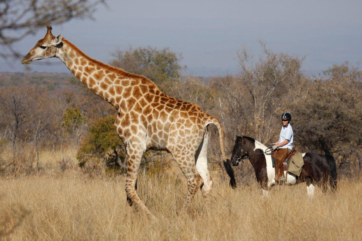 Riding safaris (16).jpg
