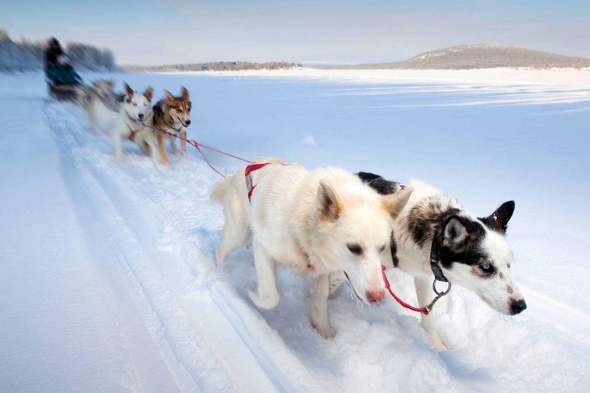 1sweden_privatejourneys_dogsleds.jpg
