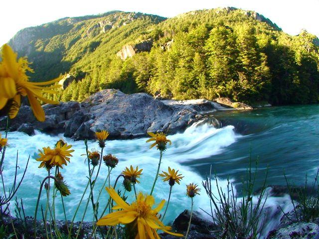 zetaflowers1.jpg
