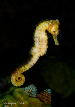 Reef Minutia