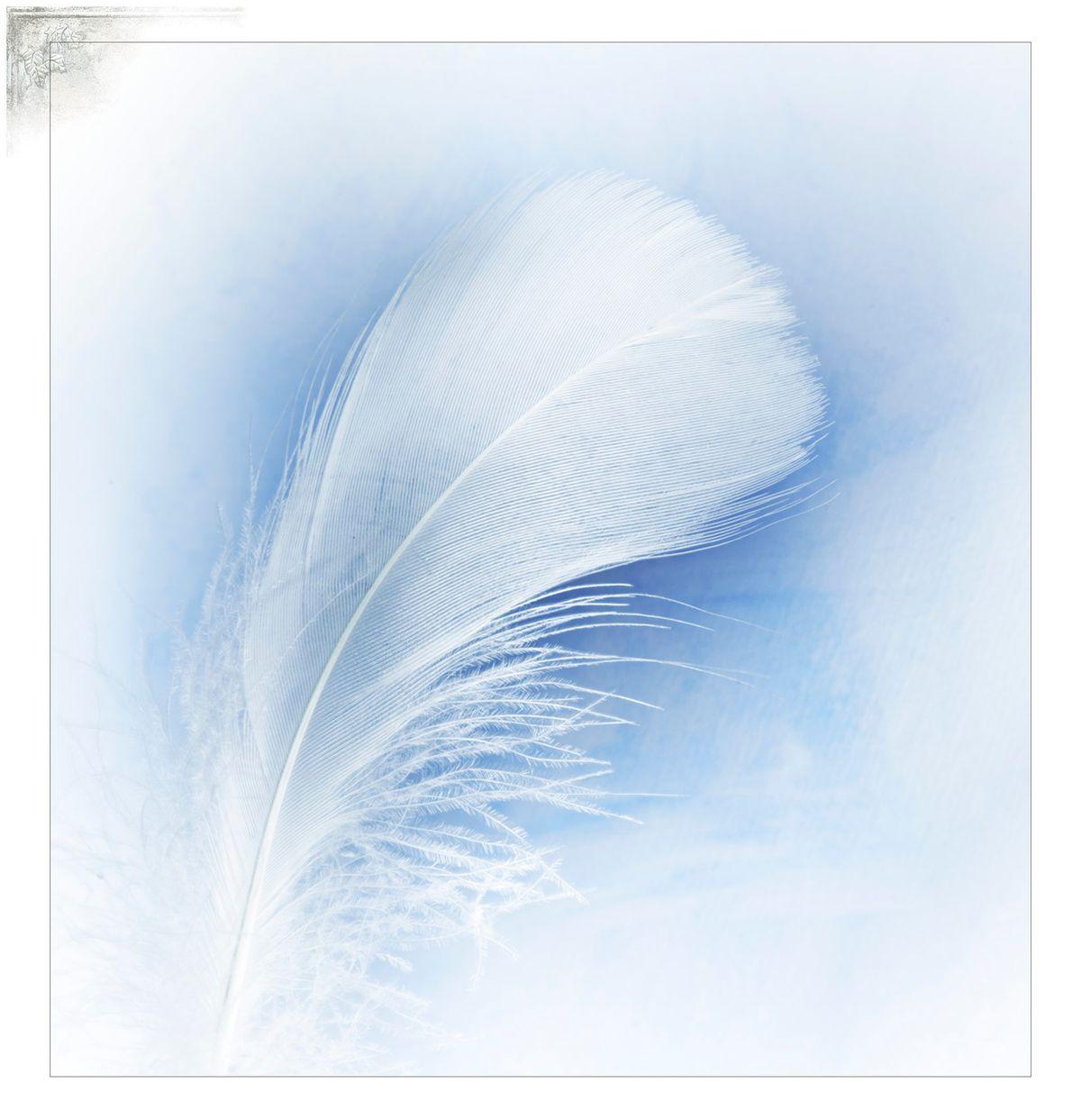 Cal-FeatherPortfPage.jpg