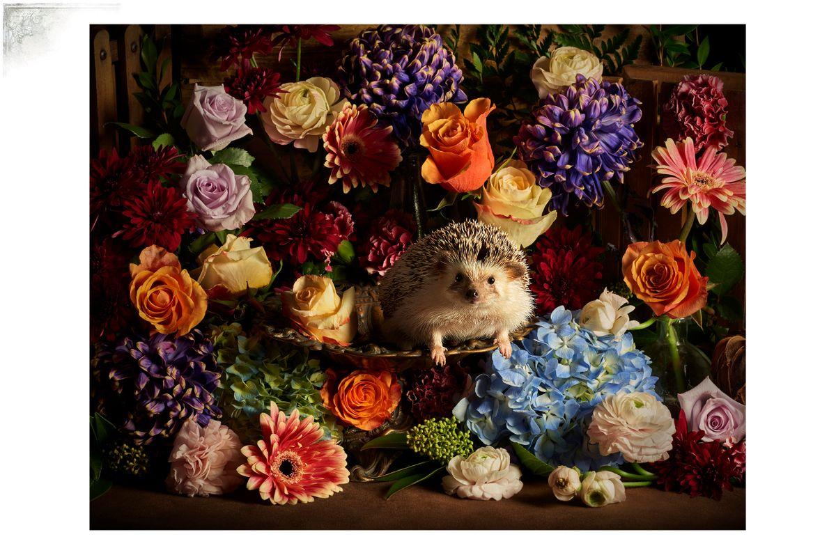 HedgehogPortfPage.jpg