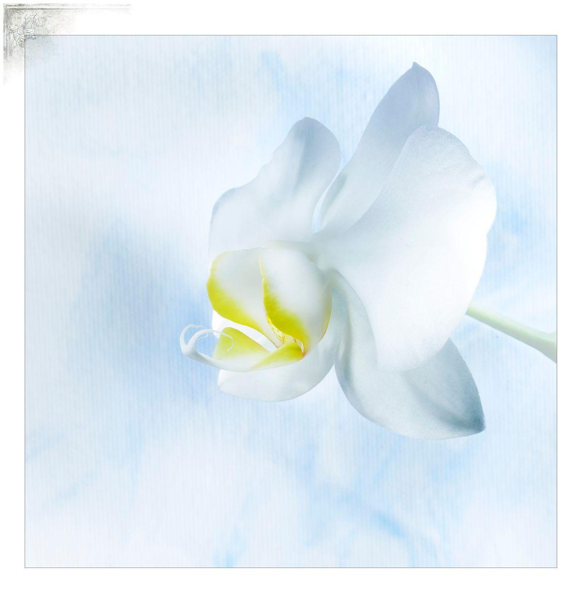 Cal-OrchidPortfPage.jpg