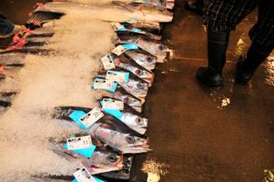 Cheapest Fish at the Honolulu  Auction