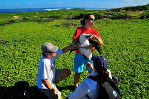 Laysan Albatross Genetic Testing