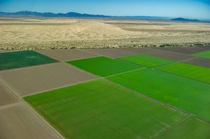 Agriculture and the Desert