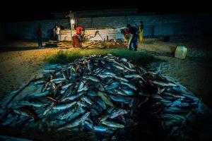 Fish Procesing in El Golfo, Sonora, Mexico