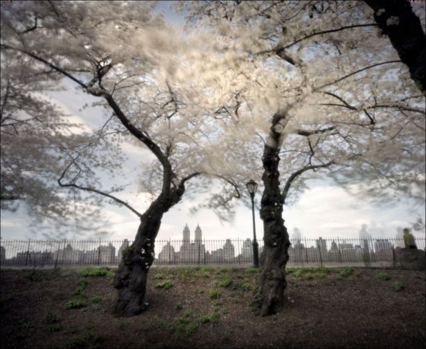 Cherry Blossoms, Central Park, New York City4x5 Pinhole Photograph