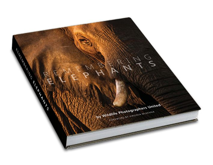 remembering_elephants_book_cover_mockup_v1.jpg