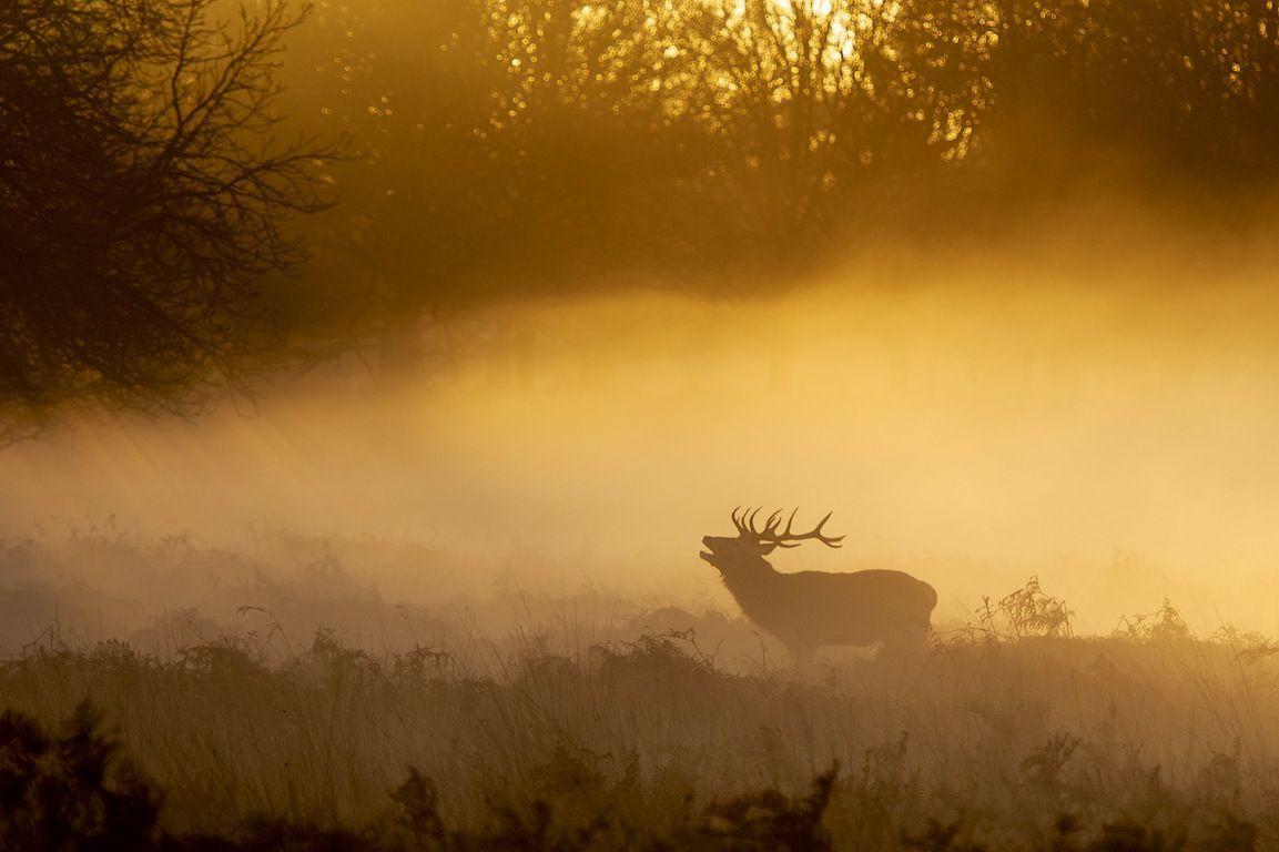 Greeting the Dawn