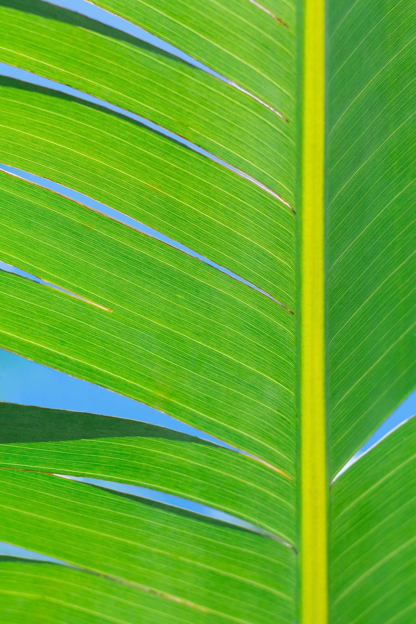 Closeup green palm leaf