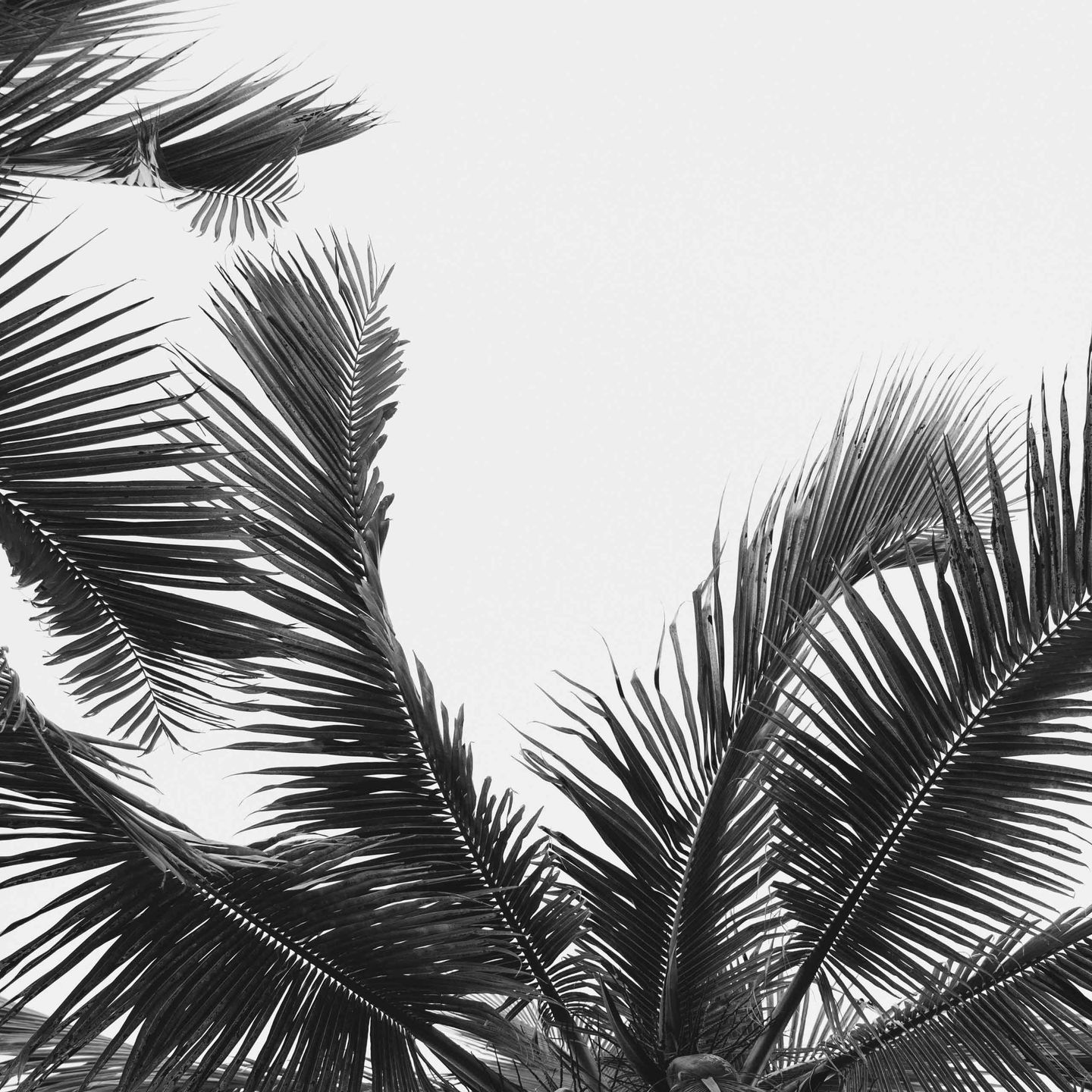 Graphic palm trees