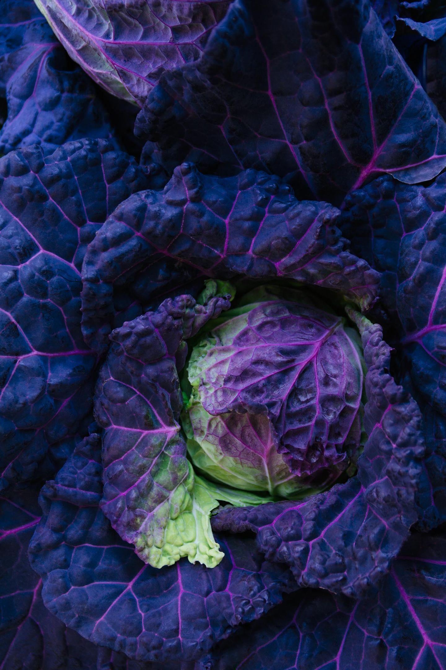 Fresh Purple San Michelle cabbage background