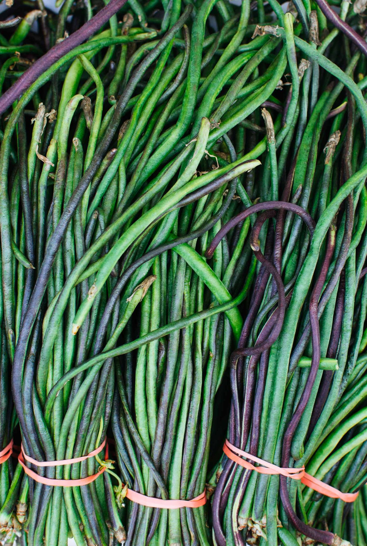 Green fresh long beans