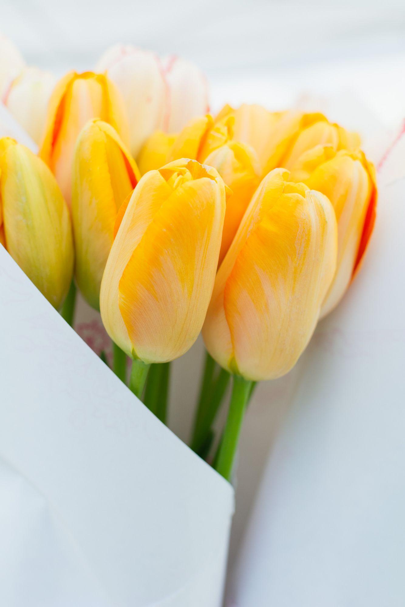 Closeup bouquet of yellow tulip flowers