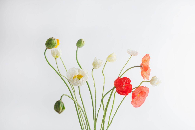Poppy flowers in profile