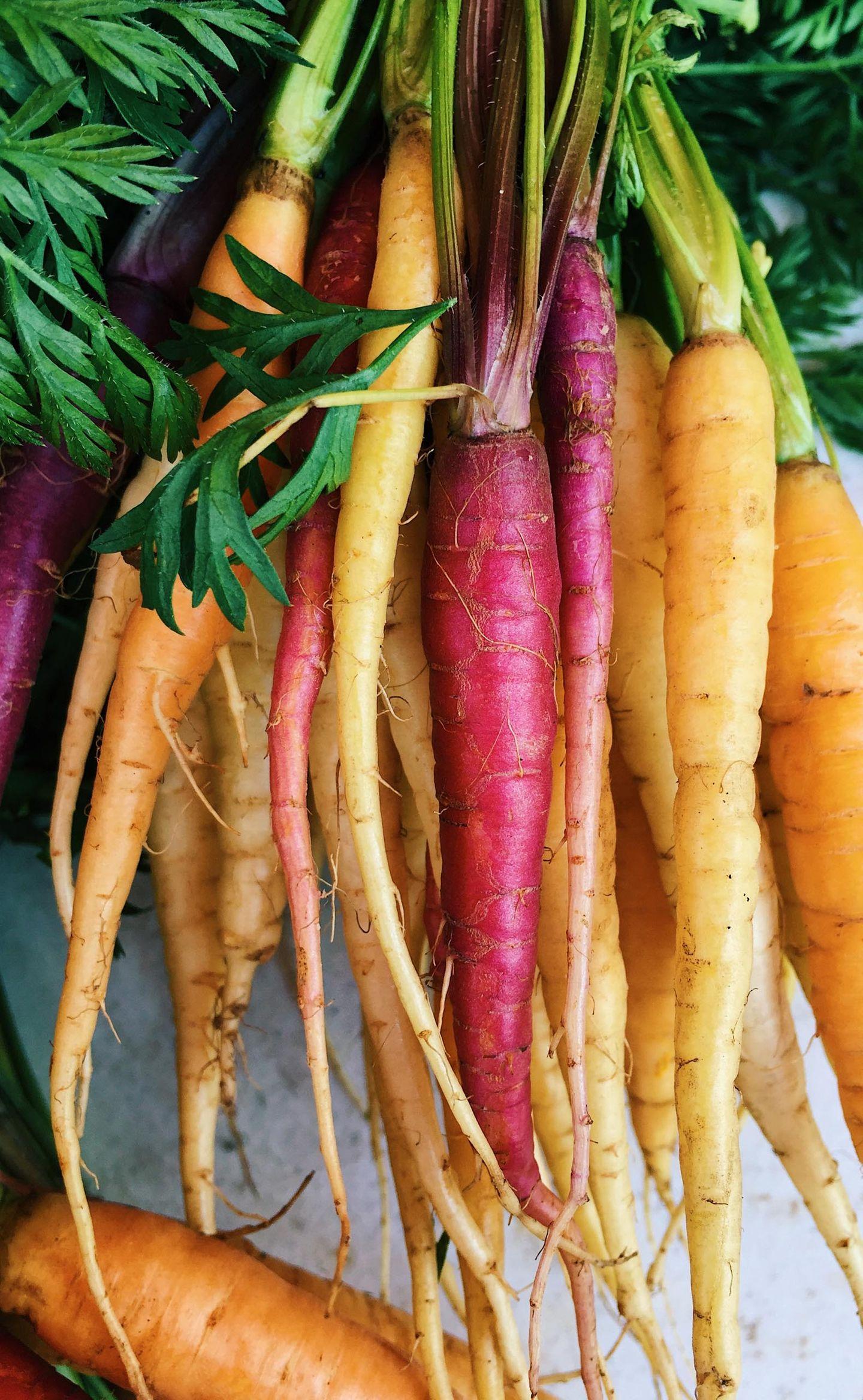 Fresh colorful rainbow carrots