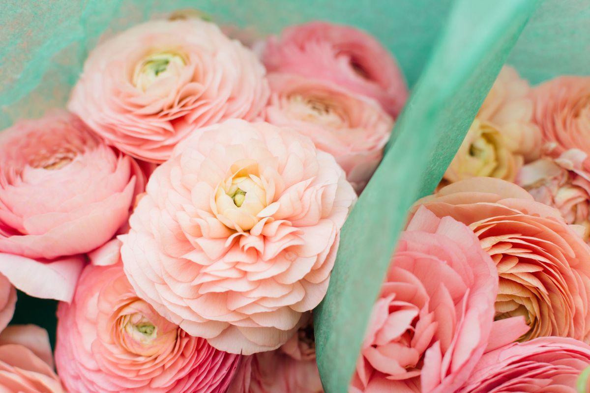 Pink Ranunculus flowers