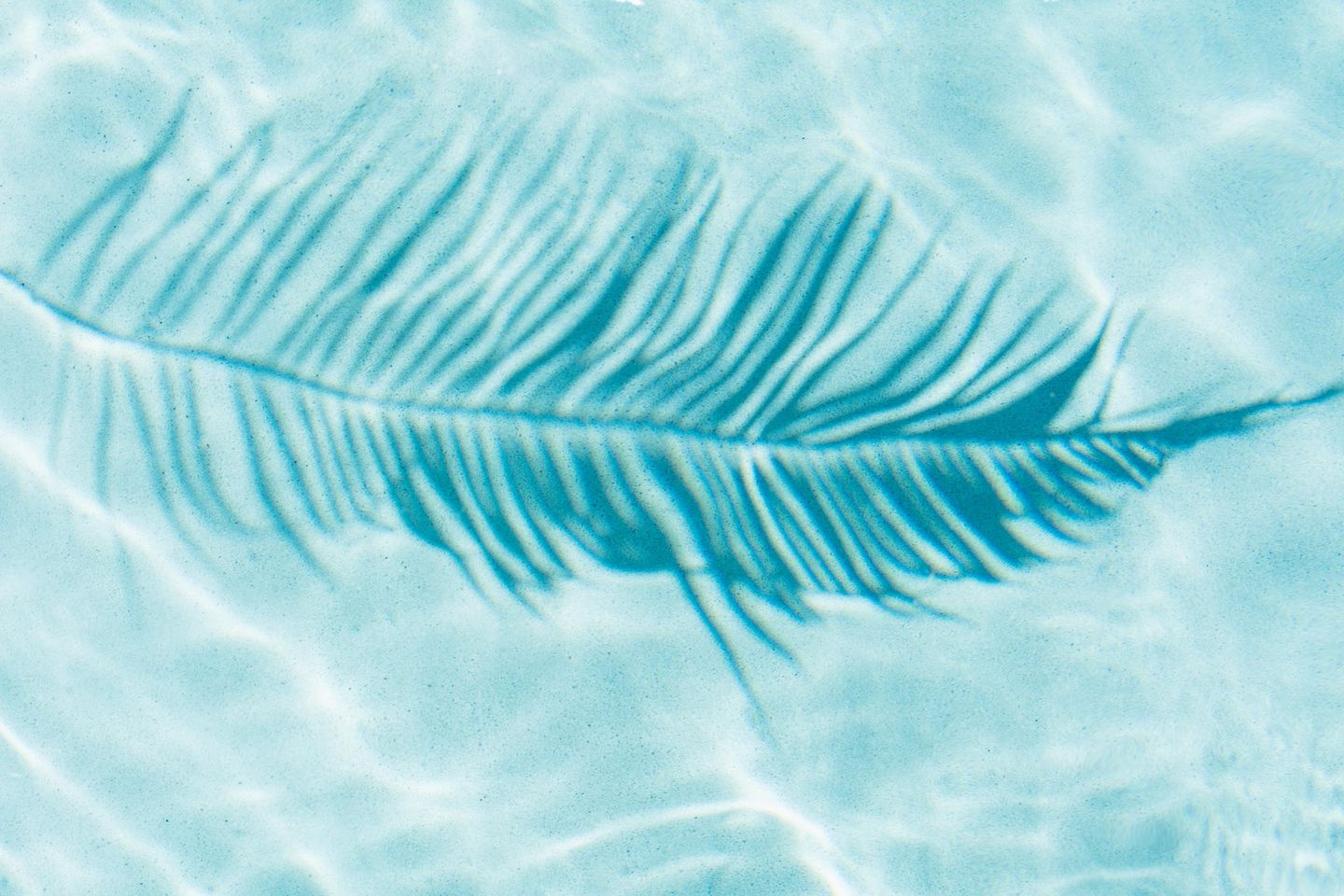 Abstract palm leaf