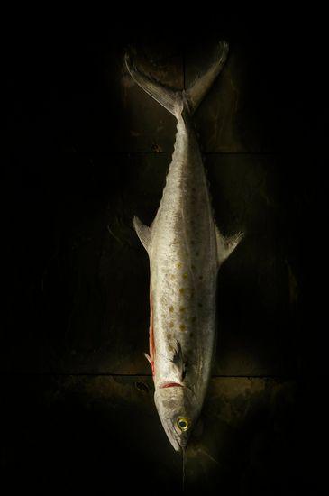 Fish_Final_.jpg