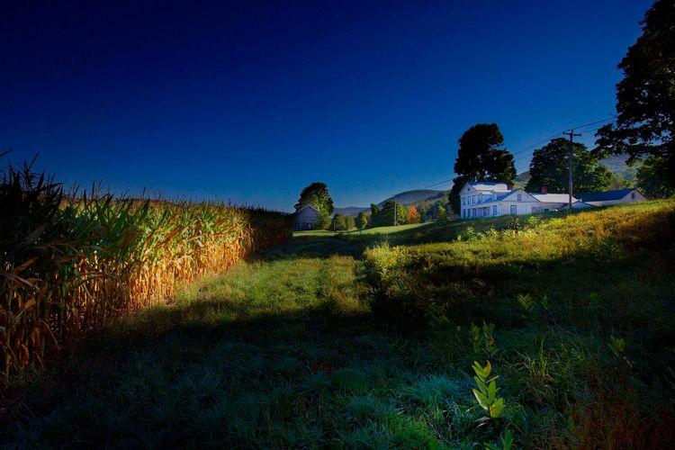 1house_with_corn_field_roxbury_ny.jpg