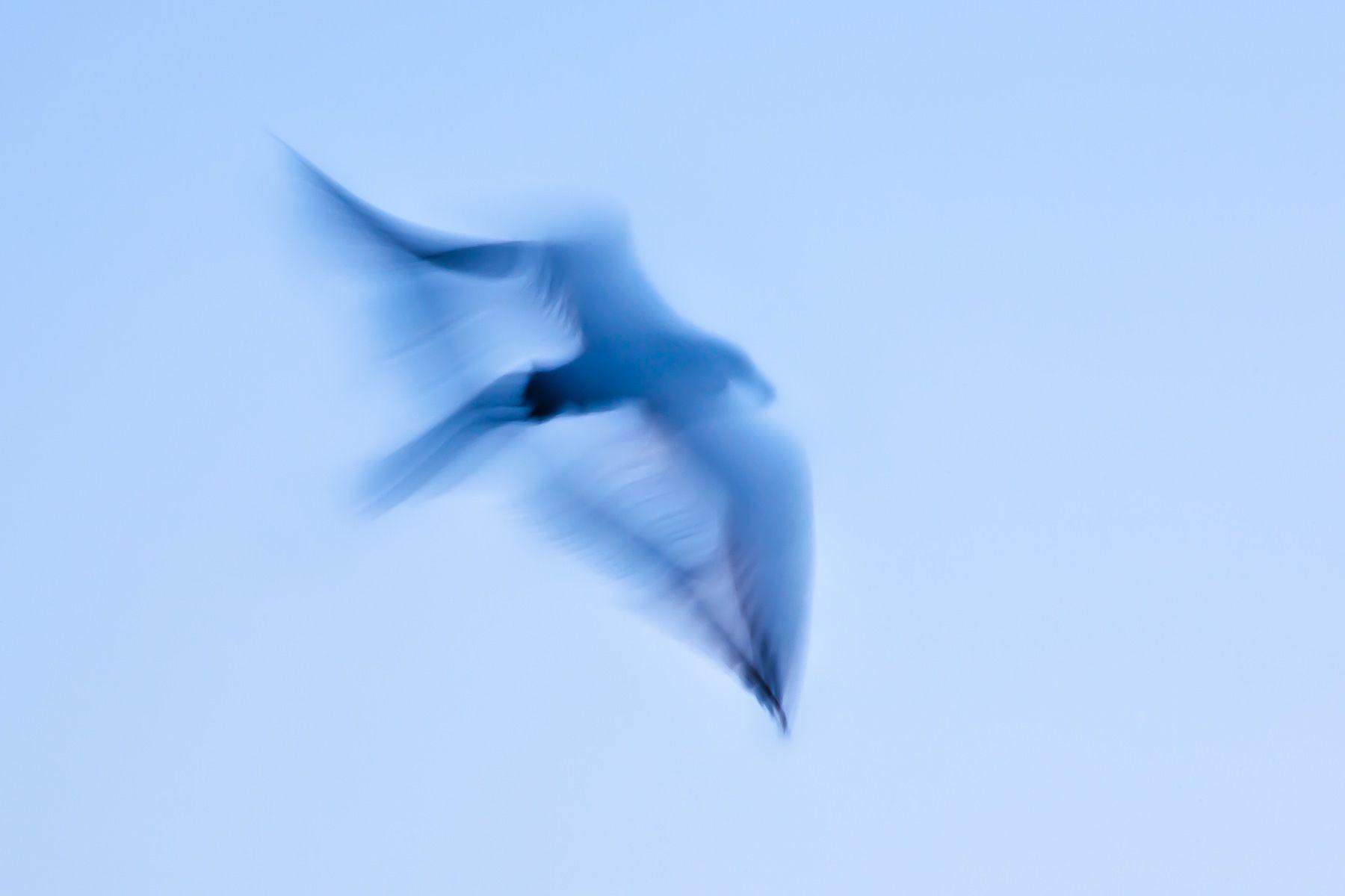 1birds__d29123.jpg