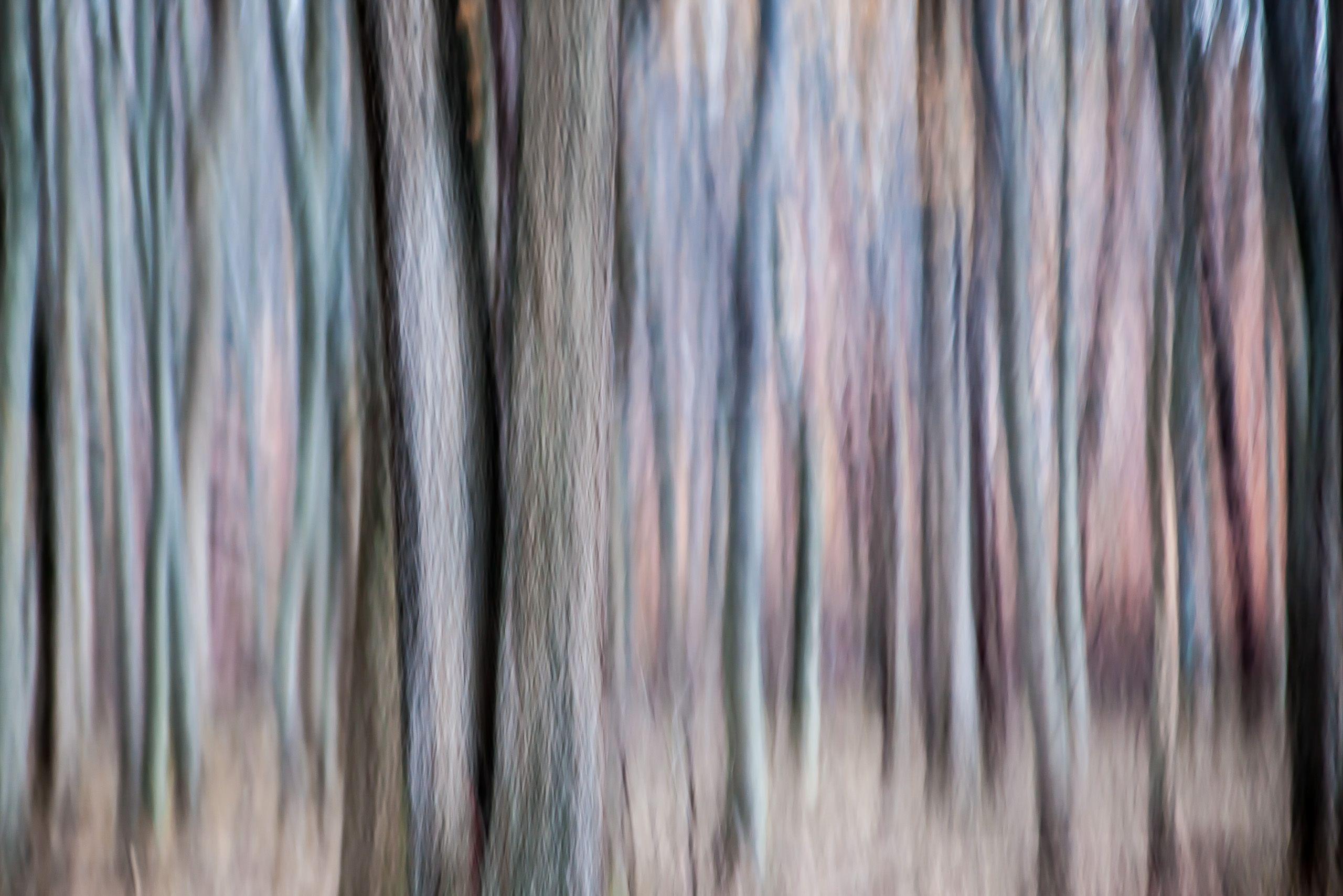 TREE #D111883.jpg