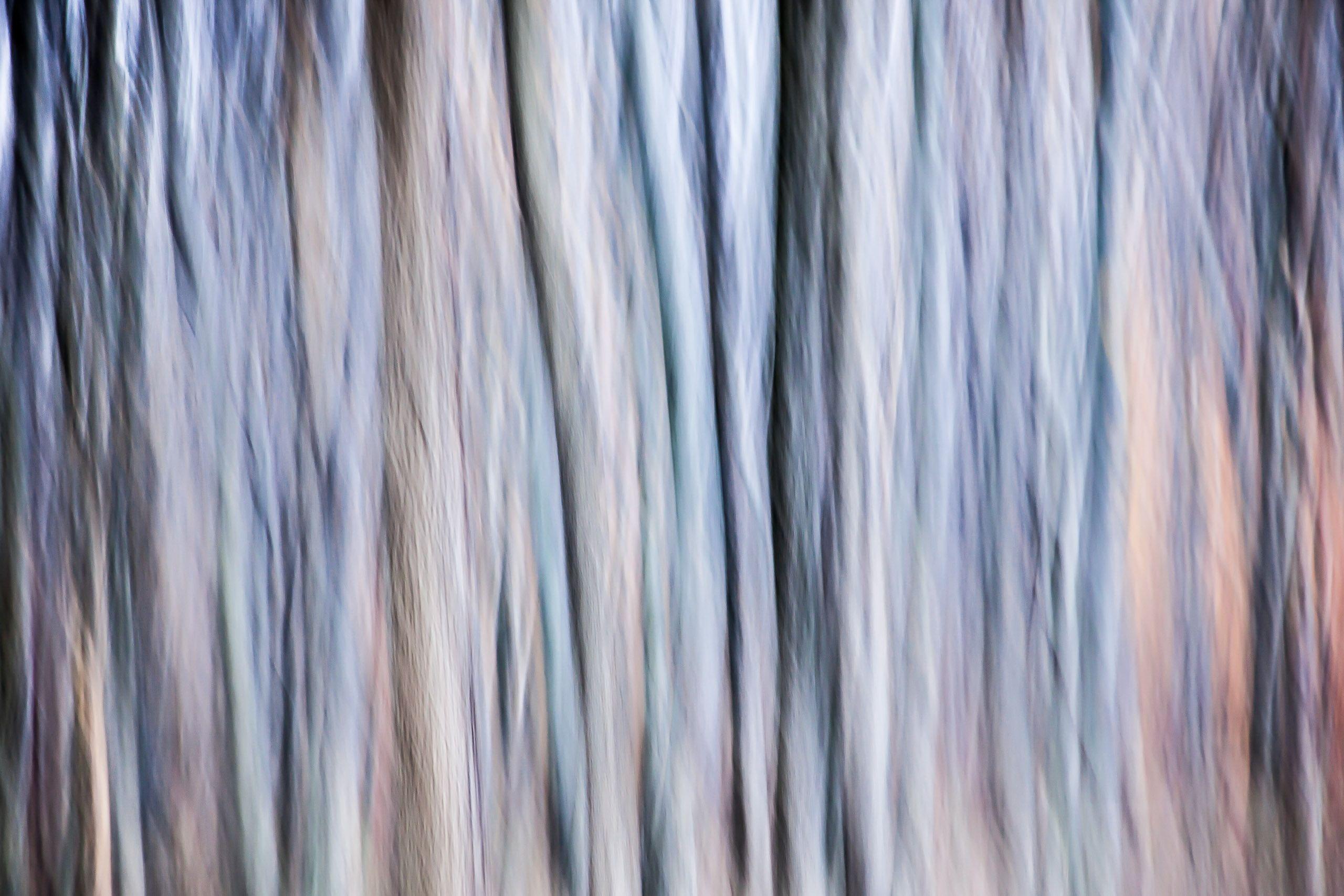 TREE #D111845.jpg