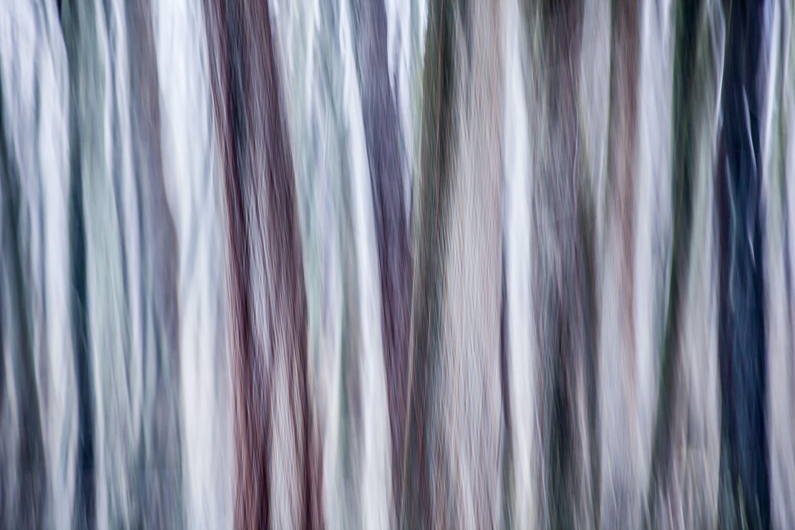 TREE #D132075.jpg
