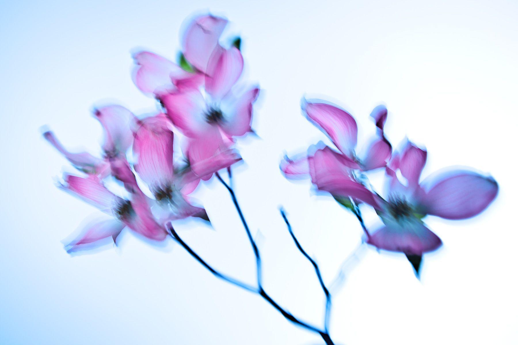 1flowers__d85697.jpg