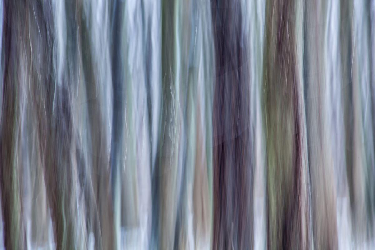 TREE #D118297.jpg