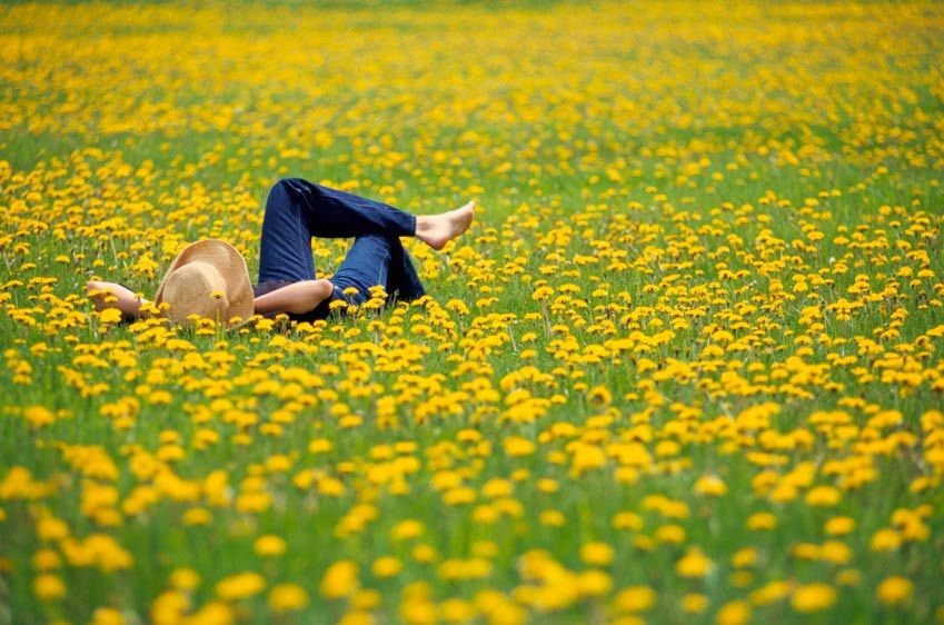 A woman lying in a field of flowers in Vermont.