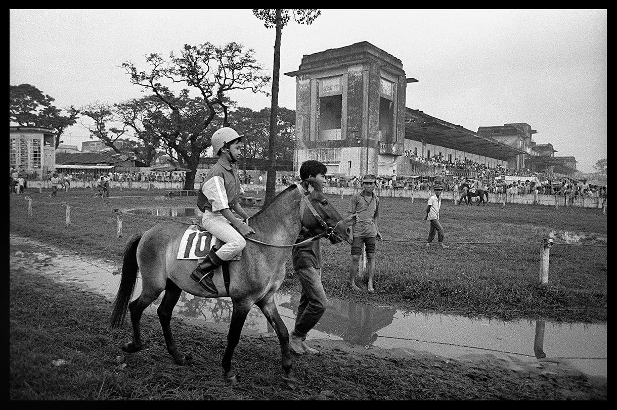 Horse Nr 10 .jpg