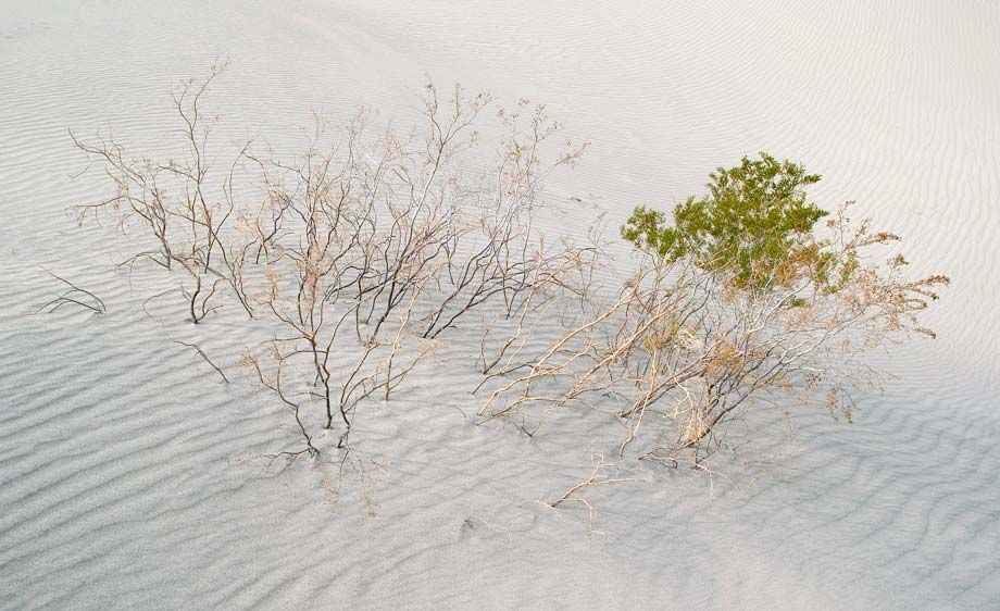 Delicate Desert