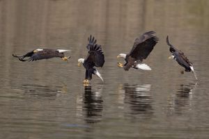 2012-10-05 Fishing sequence1_2v2composite3 8x12 TEDWEB.jpg