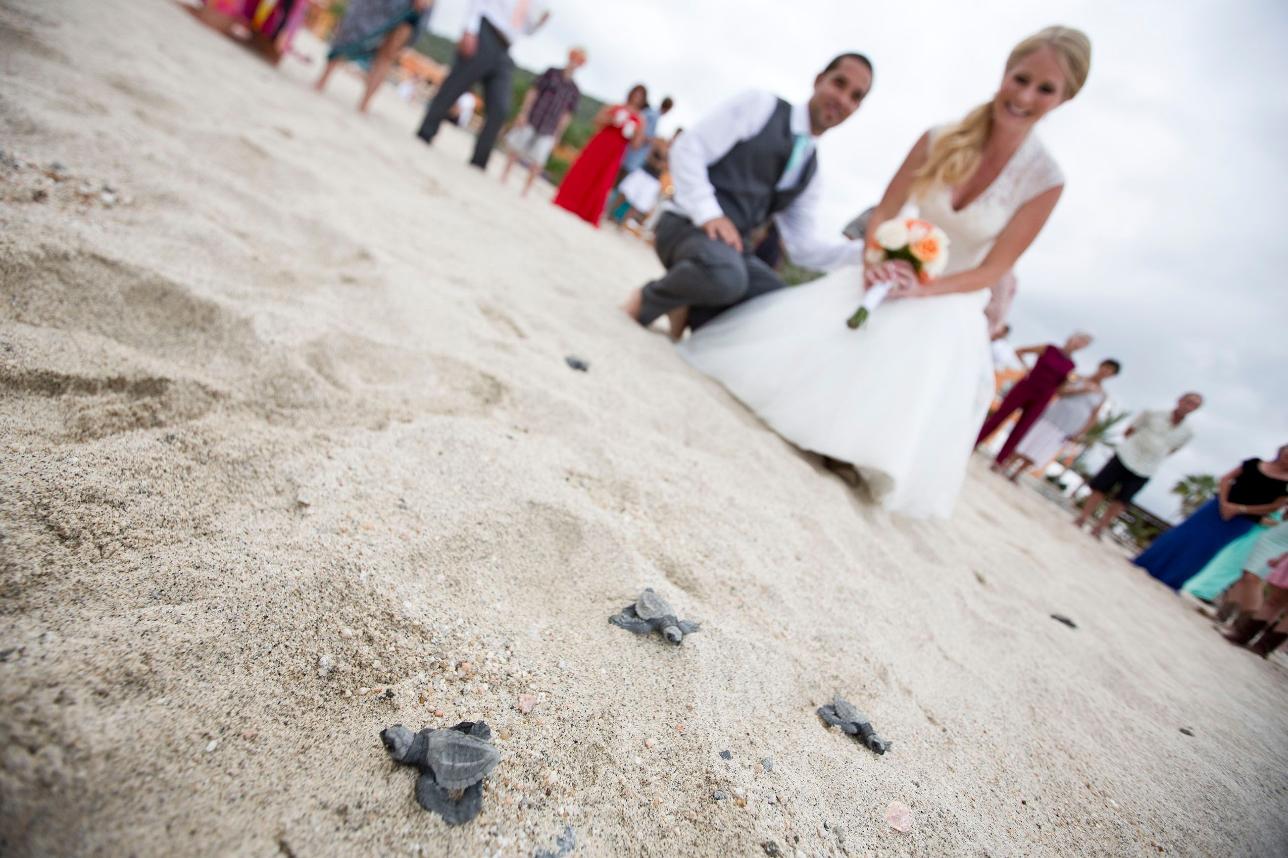 Beach Wedding with turtles