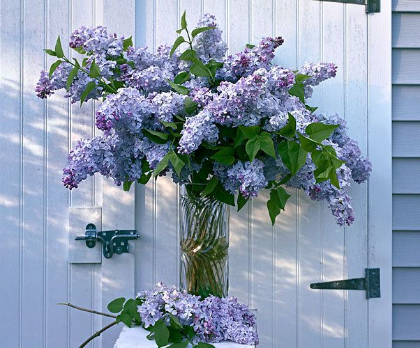 Lilac Shed