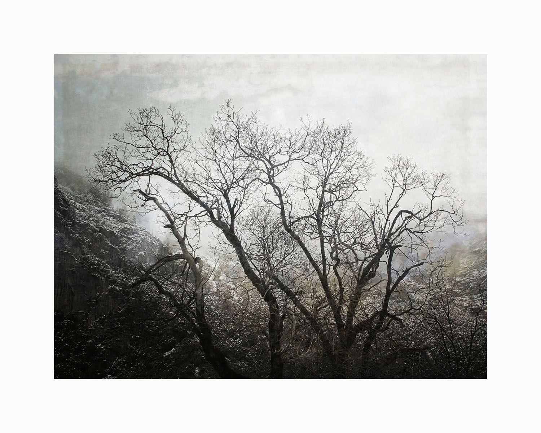 1bare_trees_1_16x20