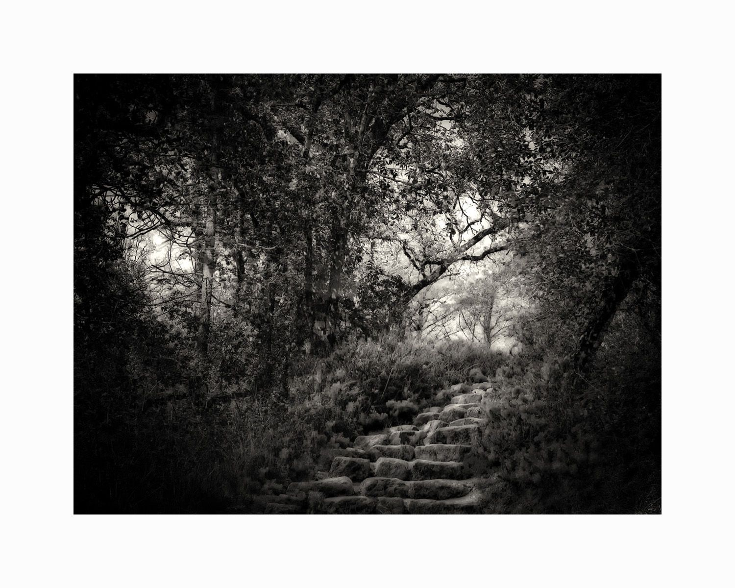 1steps_in_the_forest16x20_b_w
