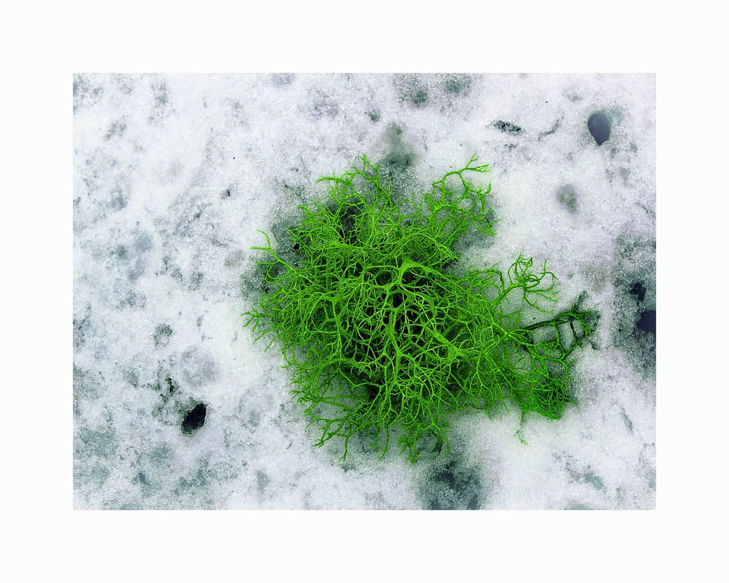 1green_moss_on_ice_16x20