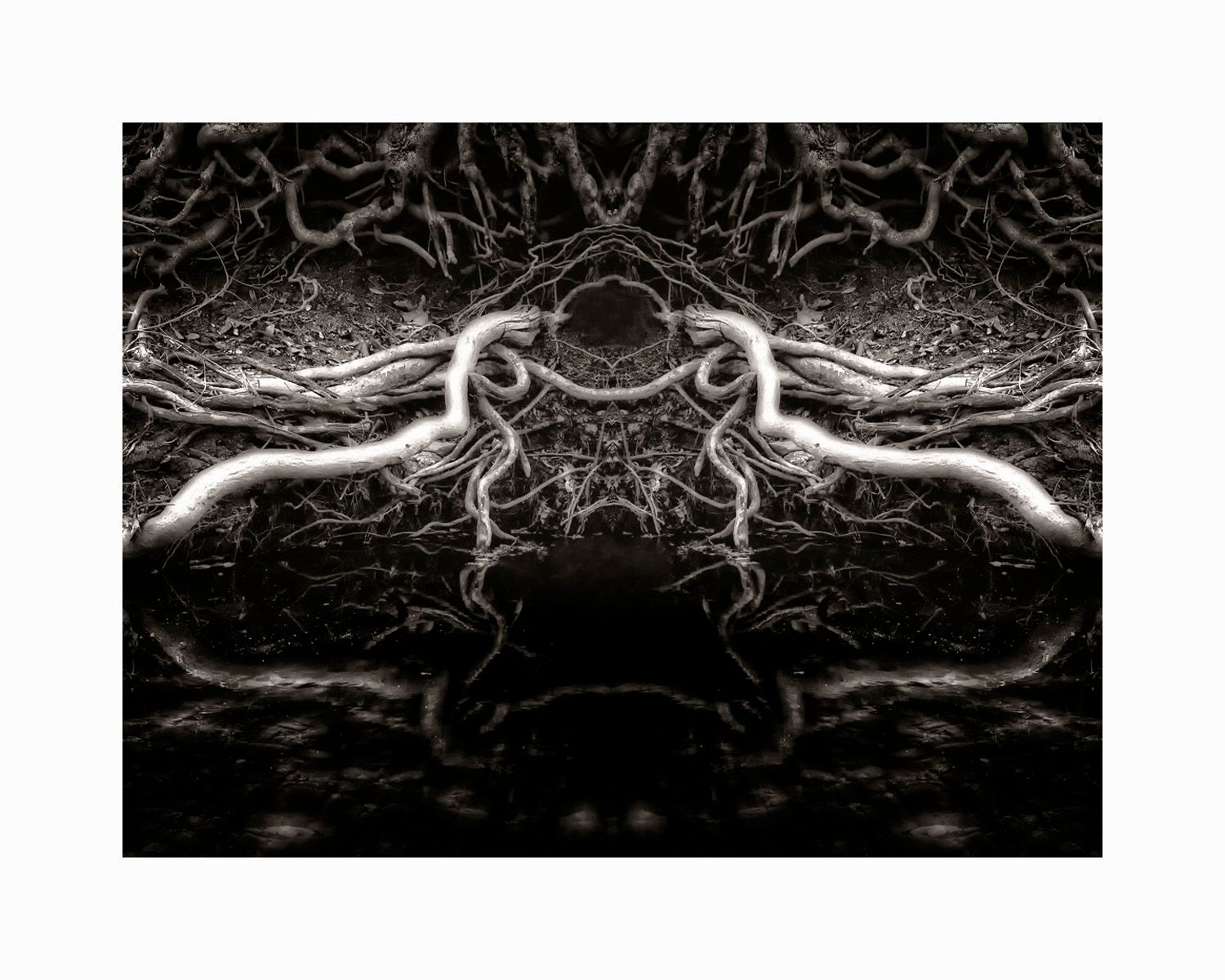 1root_forms_16x20_b_w