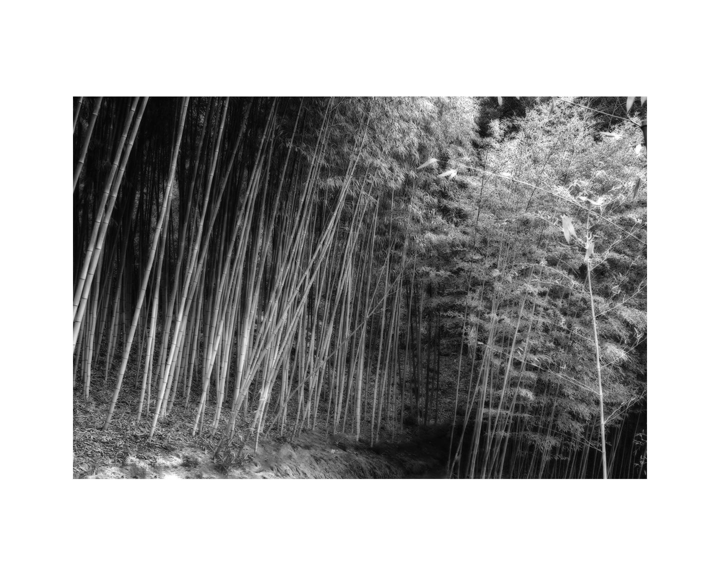 1bamboo_forest_path_216x20_b_w_2658