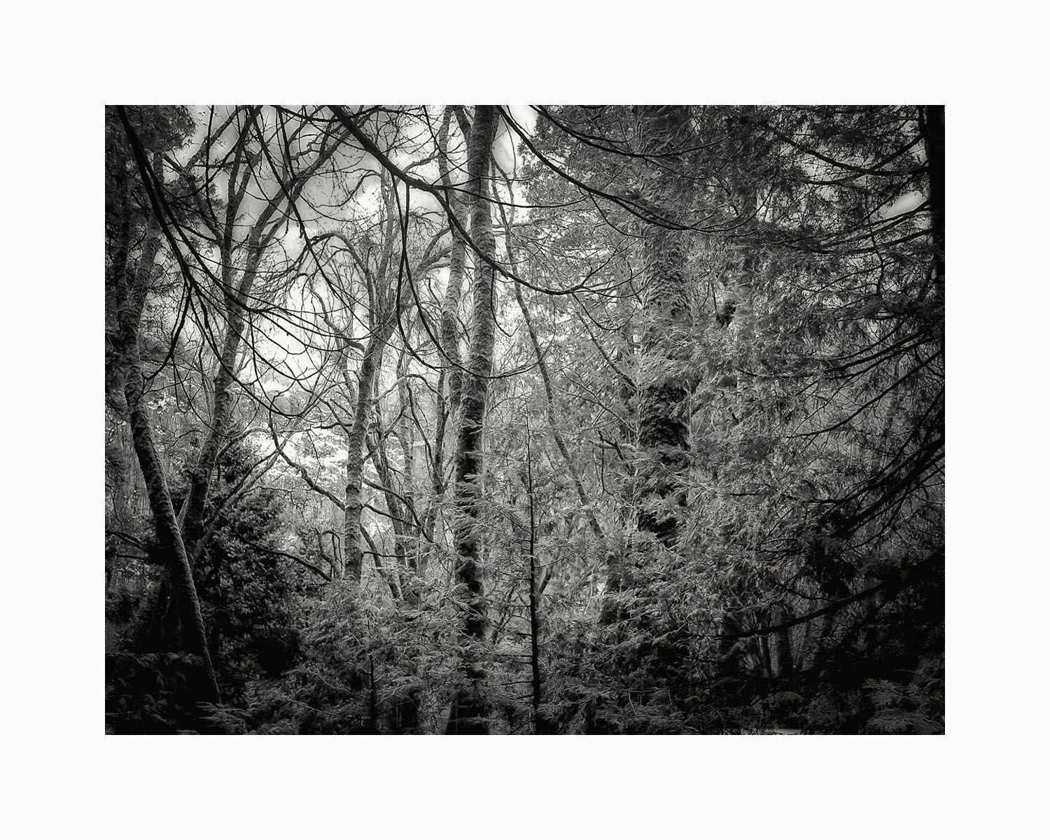 1enchanted_forest_b_w_16x20